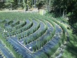 Right view of the maze